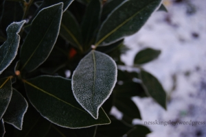 frostedleaves